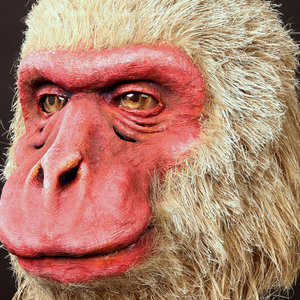 Japanese macaque - movable mask